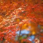 札幌近郊で紅葉と温泉を楽しむなら時期は?おすすめスポットは?