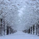 冬の札幌観光で注意することは?対策は?